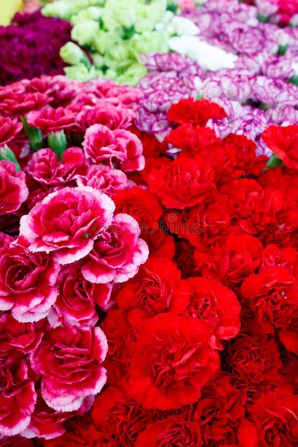 Val av olika färgrika blommor som en bakgrund royaltyfria foton