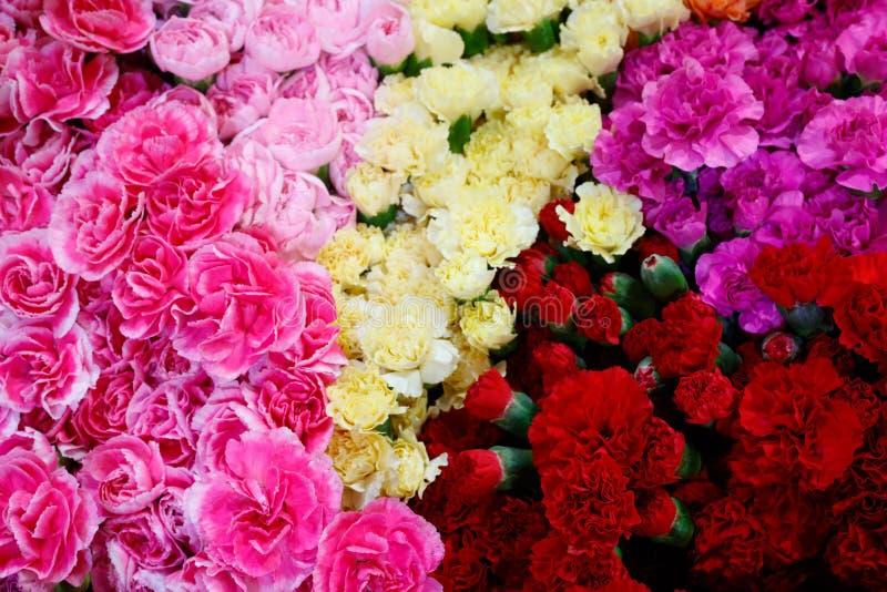 Val av olika färgrika blommor som en bakgrund fotografering för bildbyråer