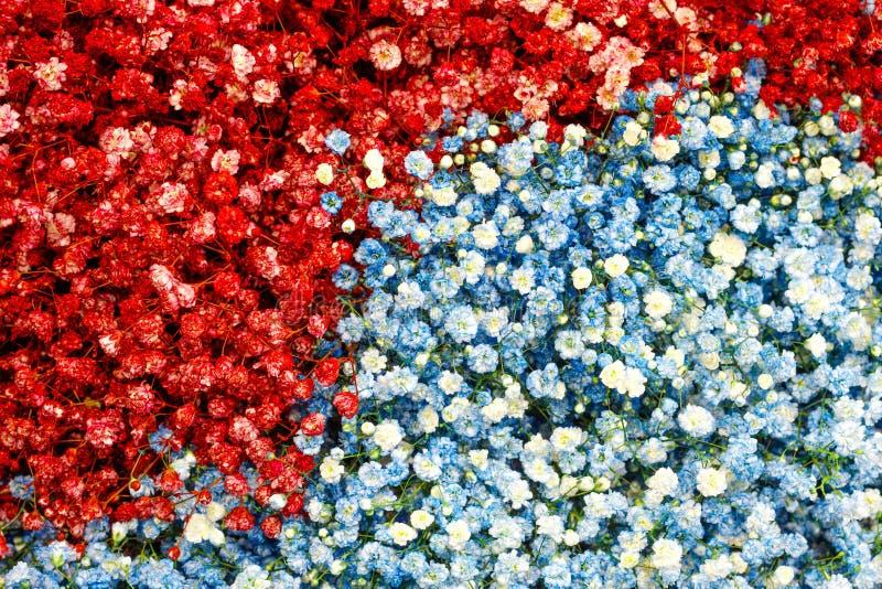 Val av olika röda blåa färgrika blommor som en bakgrund royaltyfri bild