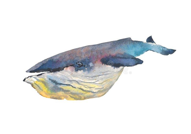 val colors härlig blur för djur bakgrund havet för bläckfisken för den croatia fokusfotoen det octpous olikt mycket Vattenfärg Ha stock illustrationer