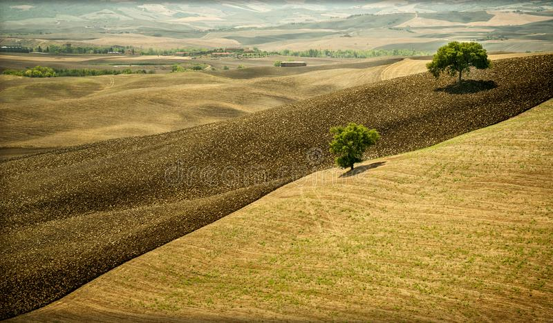 Val d ` Orcia,是托斯卡纳的区域,当柔和的小山耕种主要与铈 库存图片