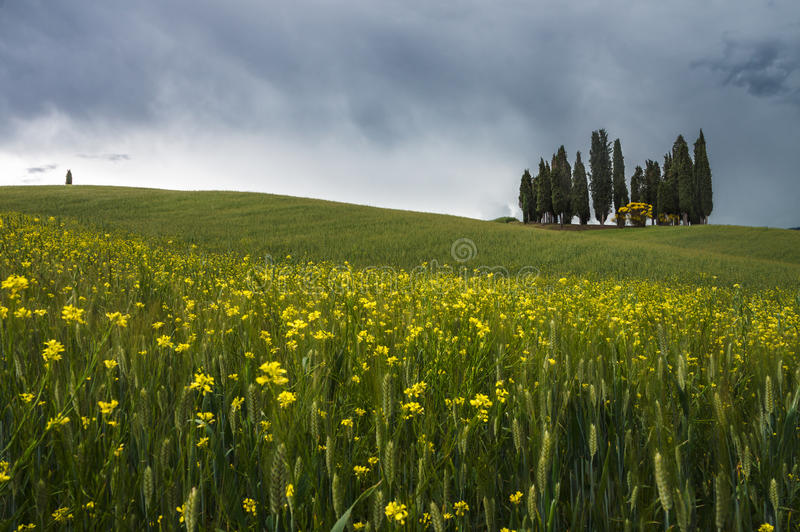 Val d'Orcia landscape. In spring. Tuscany, Italy stock photography