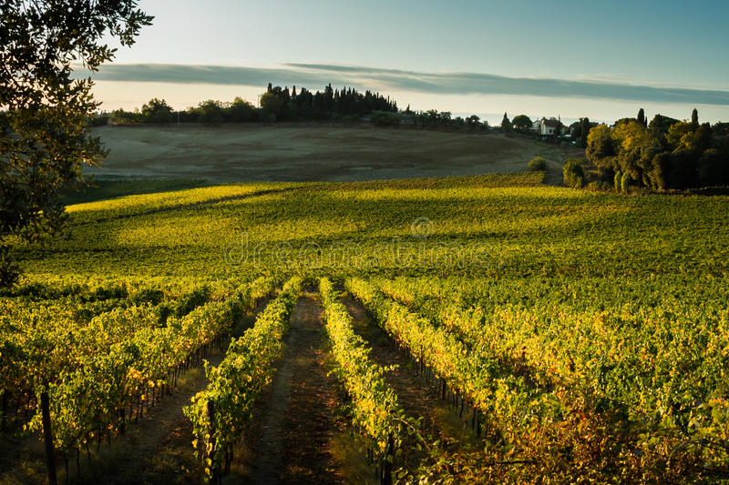 VAL D`ORCIA, TUSCANY/ITALY - Vineyard in Val d`Orcia stock images