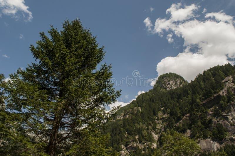 Val di Mello, Val Masino, Valtellina, Sondrio, Italy, Europe royalty free stock image