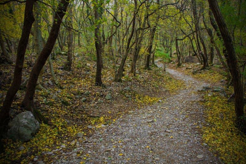 Val Rosandra Forest stock foto