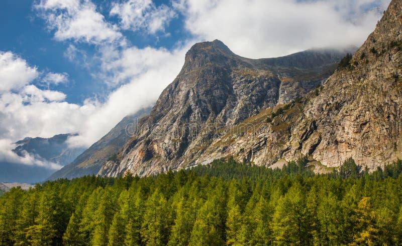 Val Veny, Italy - partes superiores da floresta e alpes italianos II fotografia de stock royalty free