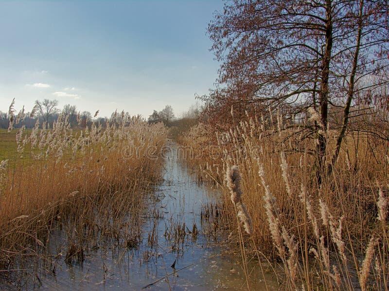 Vala congelada com junco em um dia de inverno ensolarado com o céu azul claro imagens de stock royalty free