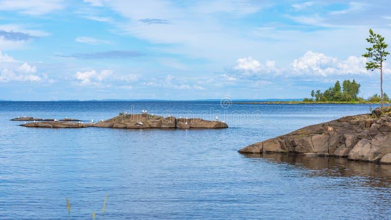 Valaam与海鸥的海岛风景 库存照片