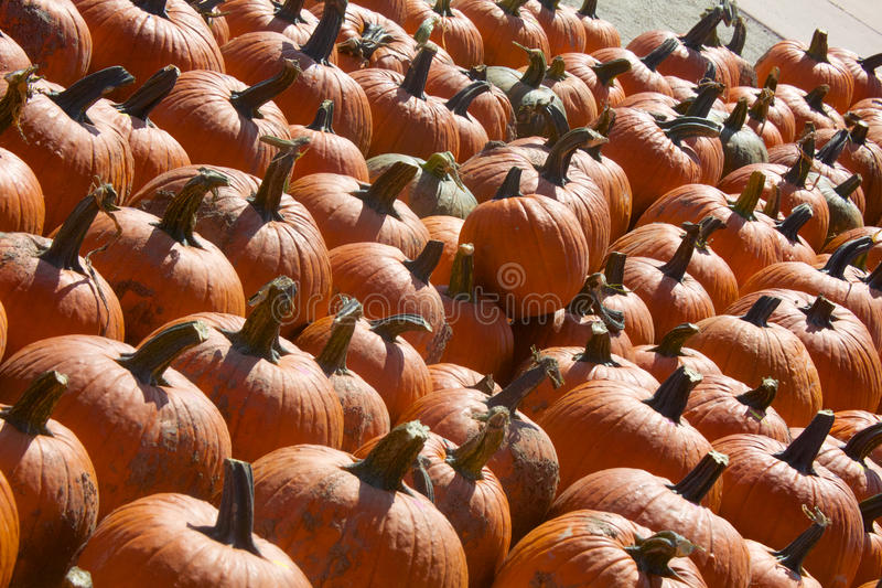 Valanga arancio delle zucche immagine stock