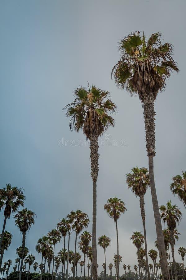 Valanga delle palme fotografia stock libera da diritti