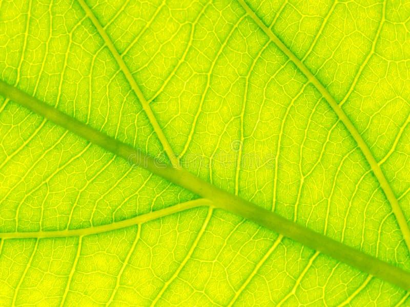 Vald fokus av den gröna bladtexturmakroen och suddigt av sidatextur Användbart som backgrond fotografering för bildbyråer