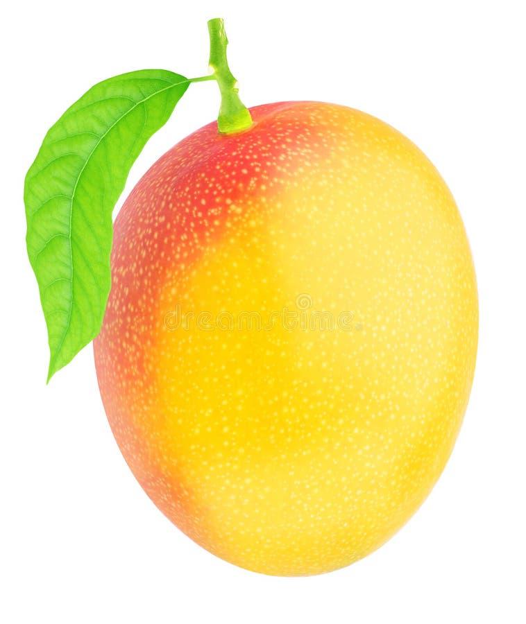 Valde nytt den enkla mango med det gr?na bladet royaltyfri fotografi