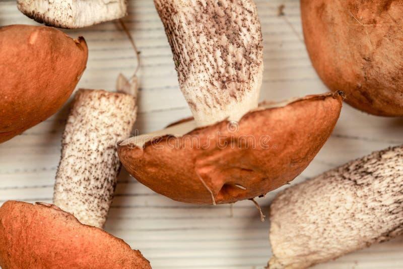 Valde nytt variation för aurantiacum för skogchampinjonLeccinum på skrivbordet för vita bräden som var klart att göras ren, grunt arkivfoton