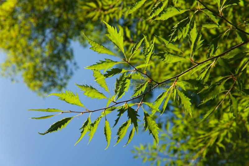 valderejo för sylvatica för naturlig park för alavafagus royaltyfria foton