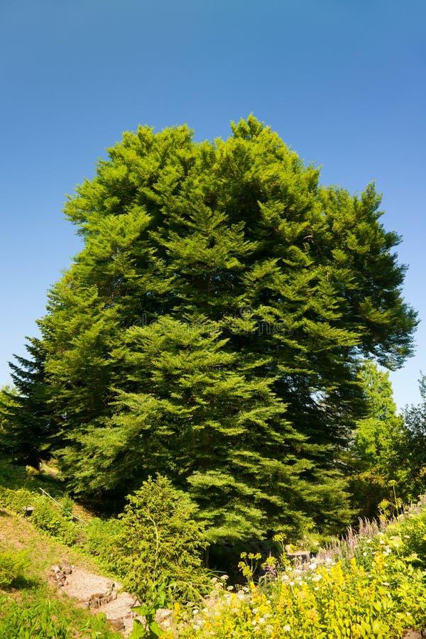 valderejo för sylvatica för naturlig park för alavafagus royaltyfria bilder