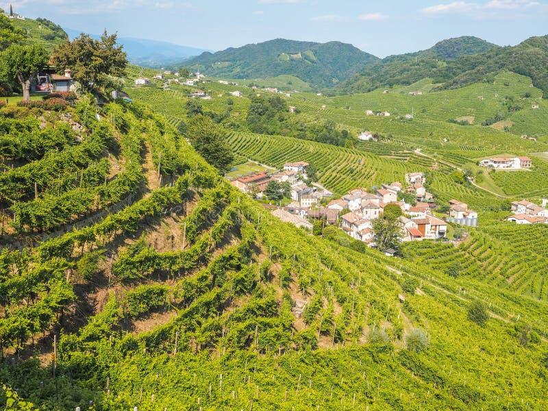 Valdobbiadeneheuvels en wijngaarden, land van Prosecco stock afbeeldingen