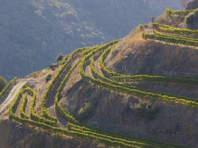 Vale 5 do vinho portuário fotografia de stock royalty free