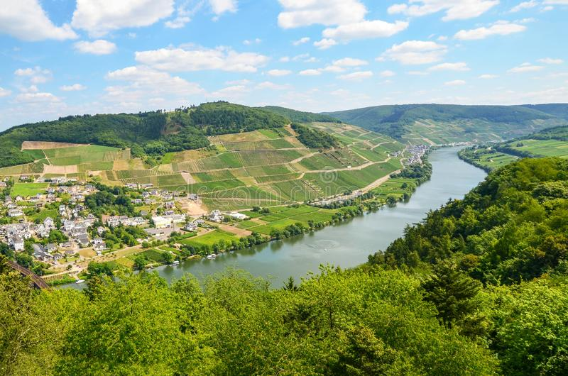 Vale Alemanha de Moselle: A vista ao rio Moselle perto da vila Puenderich e Marienburg fortifica - a região do vinho de Mosel, Al imagem de stock