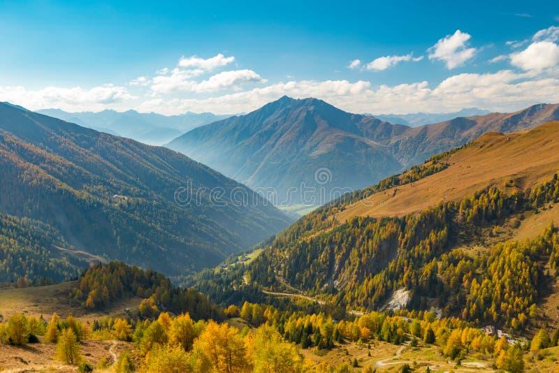 Vale alpino do outono colorido com a floresta na área de Grossglockner, Áustria do larício imagens de stock royalty free