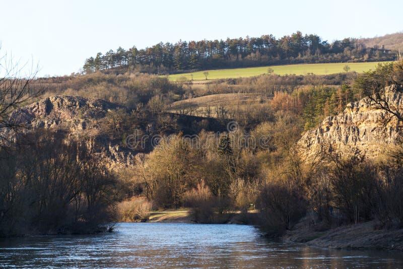 Vale bonito da pedra calcária com rio calmo Berounka durante o por do sol, floresta conífera no monte no fundo imagens de stock