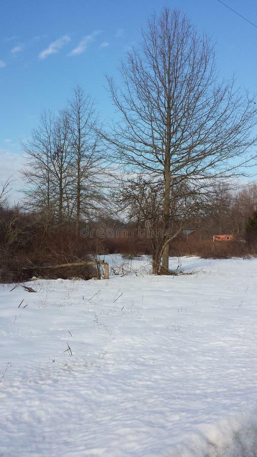 Vale calmo da neve foto de stock