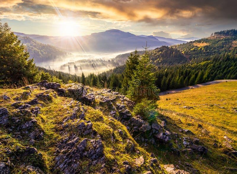 Vale com floresta das coníferas completamente da névoa na montanha no por do sol fotografia de stock royalty free