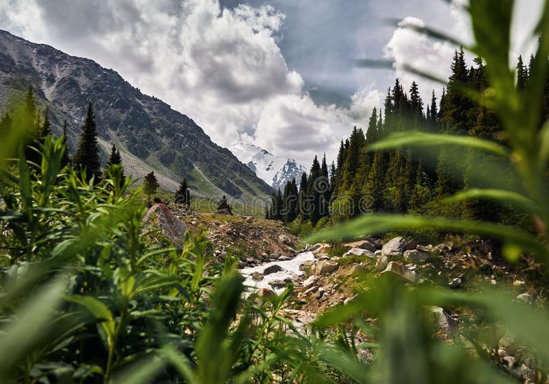 Vale da montanha em Cazaquistão fotos de stock royalty free