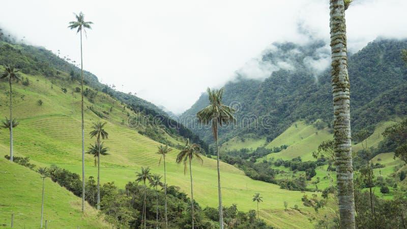 Vale da névoa das palmeiras de Cocora imagens de stock royalty free