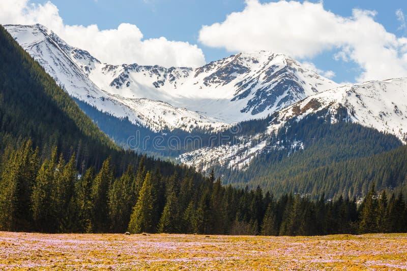 Vale de Chocholowska em montanhas de Tatra poland fotografia de stock royalty free