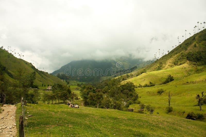 Vale de Cocora, parque natural de Colômbia imagens de stock