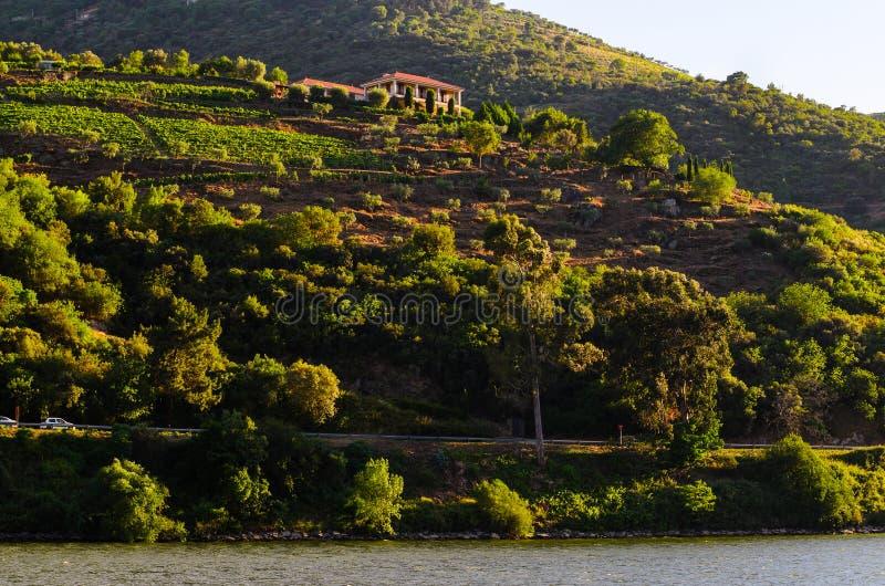 Download Vale De Douro Do Rio, Portugal Foto de Stock - Imagem de colheita, fruta: 80103206