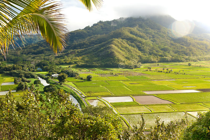 Vale de Hanalei da luxúria na ilha havaiana Kauai fotografia de stock royalty free