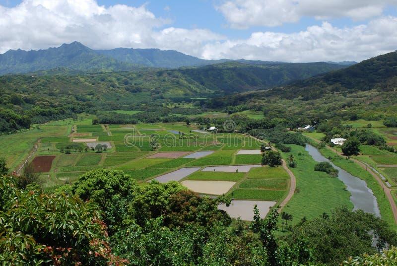 Vale de Hanalei, Kauai fotografia de stock royalty free