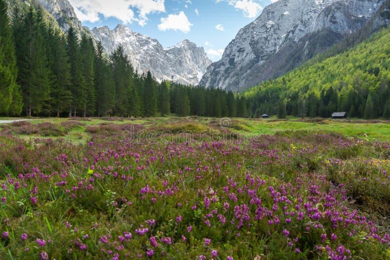 Vale de Krma nos cumes eslovenos imagem de stock