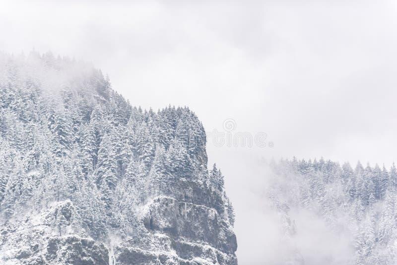 Vale denso do abeto que situa na montanha íngreme fotos de stock royalty free
