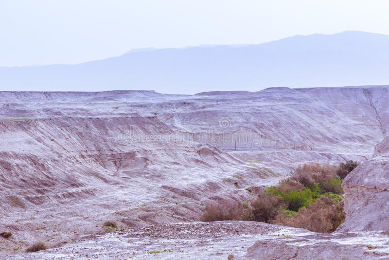Vale do deserto com vegetação no por do sol foto de stock