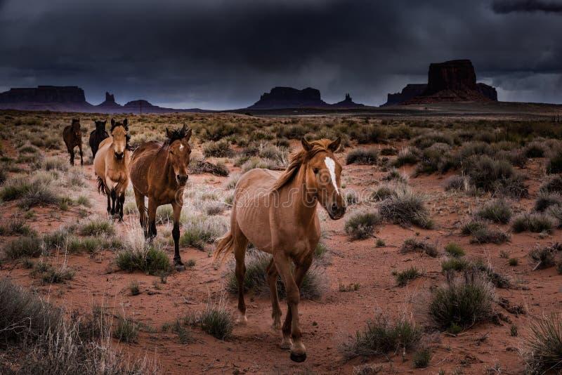 Vale do monumento dos cavalos selvagens imagens de stock