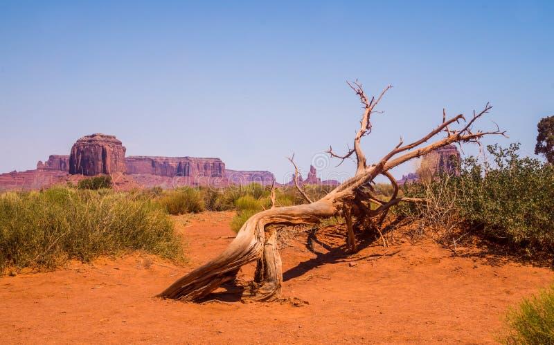 Vale do monumento no amanhecer Rochas do monumento e de árvores secas fotos de stock