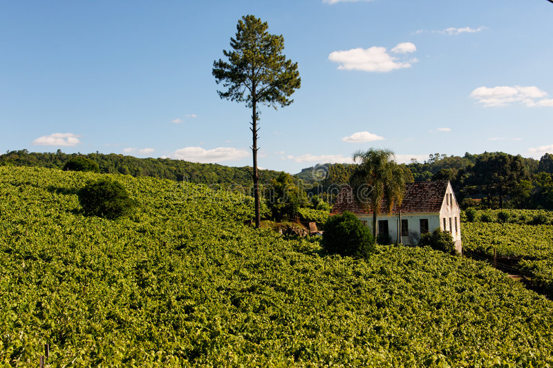 Download Vale Dos Vinhedos Vineyards Bento Goncalves Stock Photo - Image: 4818212