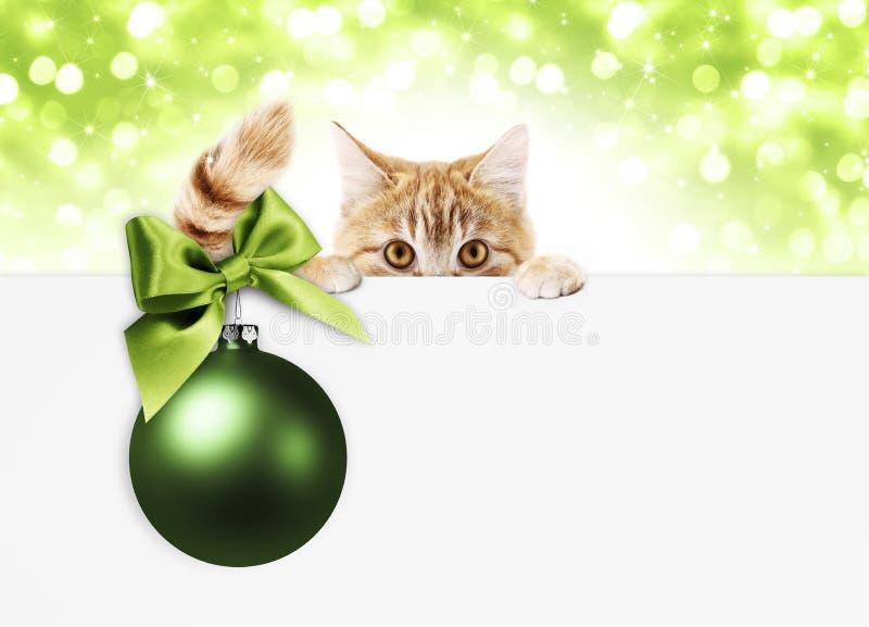 Vale-oferta do gato do gengibre do Natal com bola verde e a fita brilhante imagem de stock royalty free