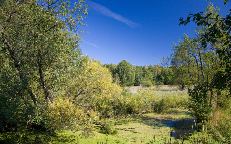 Vale pantanoso do rio de Lesna no dia outonal ensolarado fotografia de stock