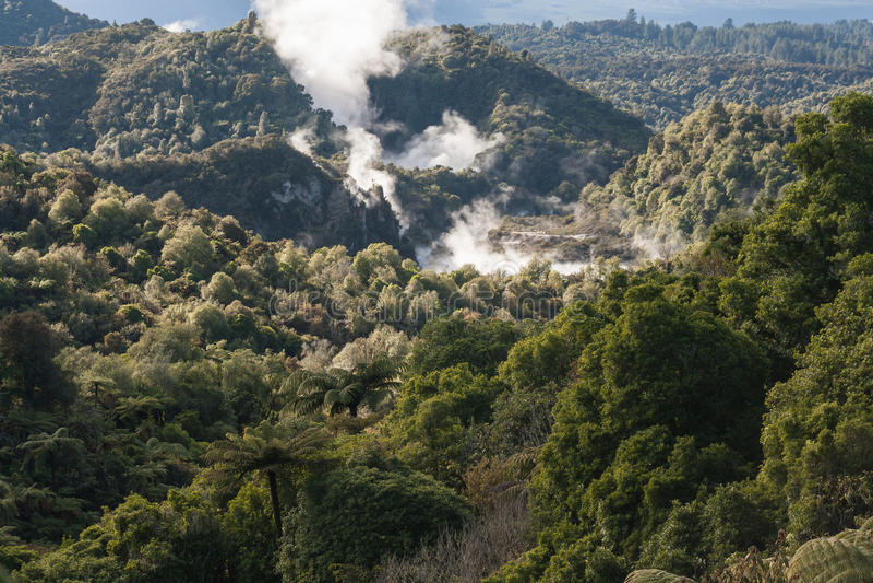 Vale térmico em Rotorua foto de stock