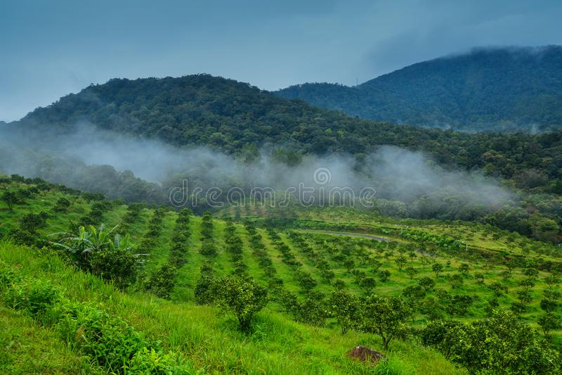 Vale verde bonito da montanha, Mountain View no lago Toba, Medan, Indonésia fotografia de stock