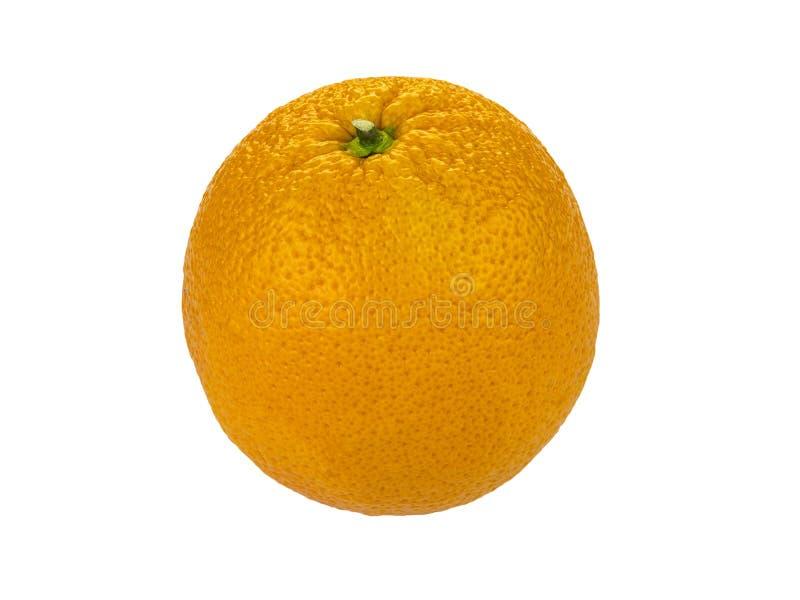 Valencia apelsin över vit bakgrund royaltyfria foton