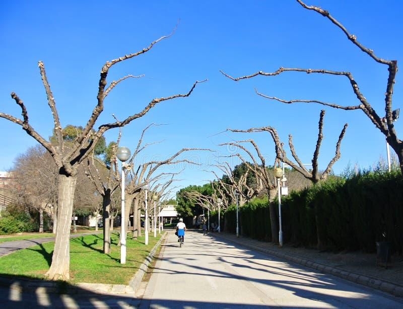 VALENCIA SPANIEN - JANUARI 31, 2016: Nya beskar trädfruncher på parkera av Turia arbeta i trädgården nära staden av konster och v arkivfoto