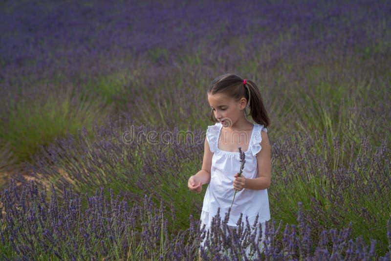 Valensole, Frankrijk Meisje op lavendelgebied royalty-vrije stock afbeelding