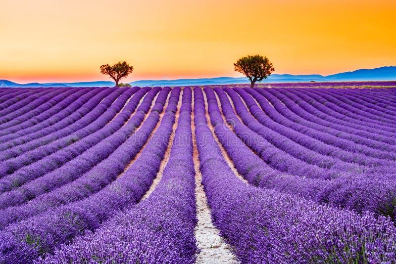 Valensole lavendel i Provence, Frankrike fotografering för bildbyråer