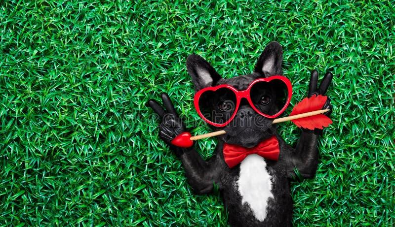 Valentijnskaartenhond in liefde stock foto's