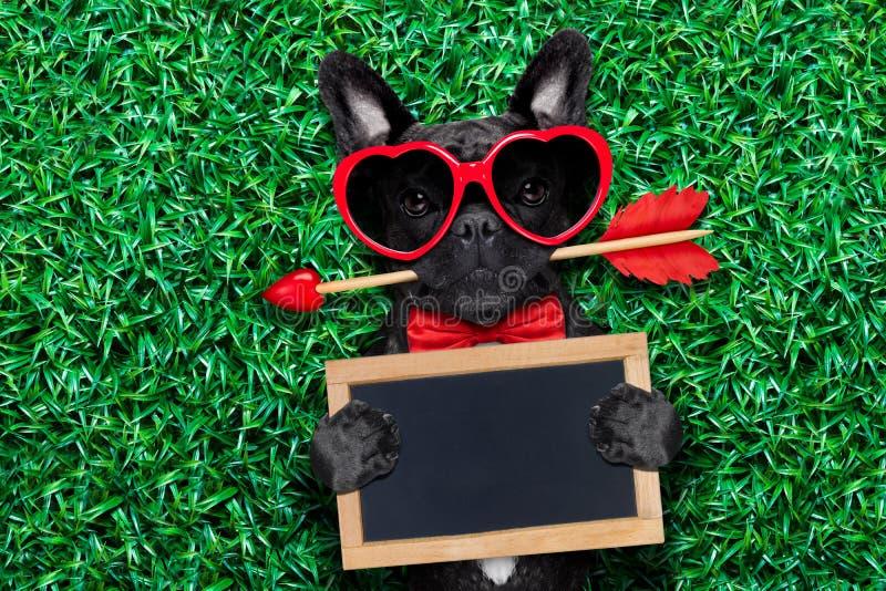 Valentijnskaartenhond in liefde stock foto