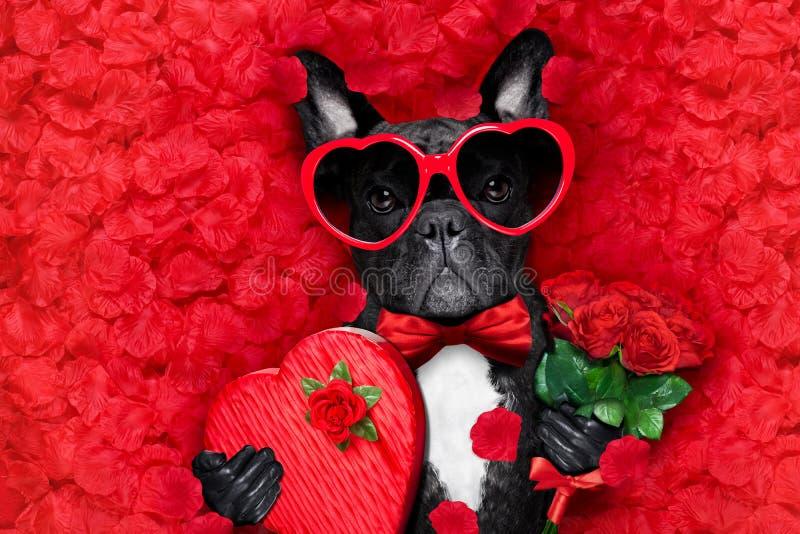Valentijnskaartenhond in liefde stock afbeeldingen